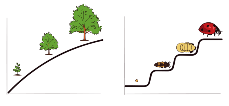 An image shows three stages in the continuous growth of a tree. A second image shows four distinct stages of development in the life cycle of a ladybug.