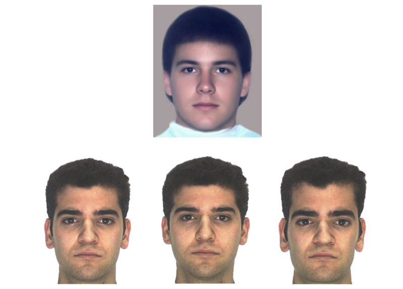 This figure shows a male face averaged from 32 individual faces. In addition, there are 3 variations of a different male face: the original, one morphed toward - and one morphed away from average-ness. In all cases, it is clear that average faces are generally more attractive.