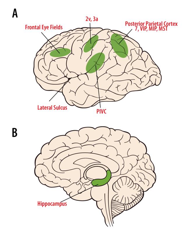 The Vestibular System | Noba