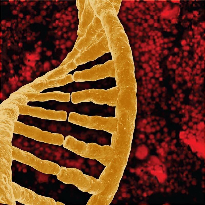 A DNA single strand.