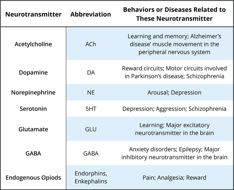 types of neurotransmitters and their functions pdf