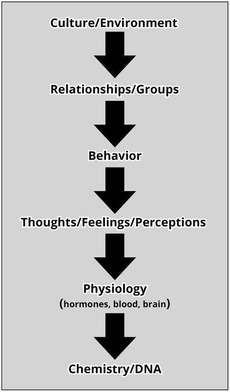 Levels of analysis in psychology: Cultural/Environment; Relationships/Groups; Behavior; Thoughts/Feelings/Perceptions; Physiology; Chemistry/DNA.