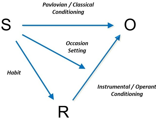 Image depicts the combination of classical and operant conditioning which typically occur in the real world. The process, or the interplay between stimuli, reinforcers, and outcomes, is described in the preceding paragraphs.