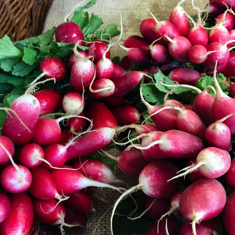 A bunch of red radishes