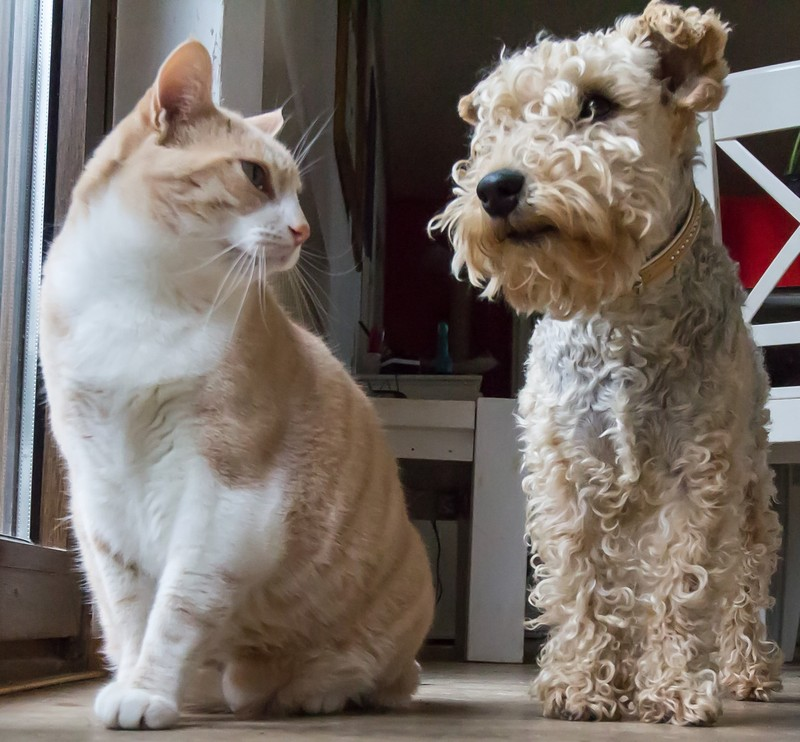 A dog and a cat sit side by side.