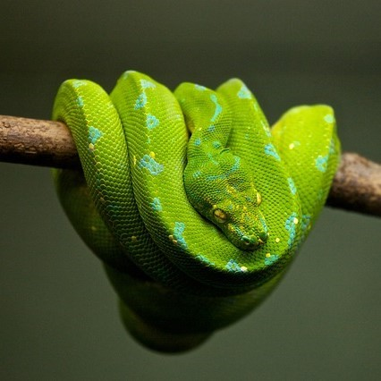 A tree snake.