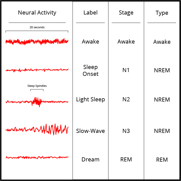 Image accompanies the previously listed stages of sleep